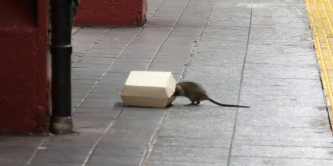 Una rata se sube a una caja de comida en una parada de metro en Nueva York en julio de 2017.