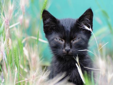 Este gato con el ceño fruncido parece estar tremendamente molesto.