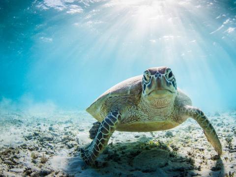 ¿Esta tortuga marina nos está mirando mal?