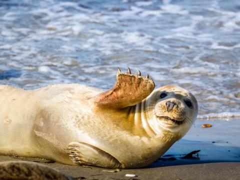 Esta foca súper social parece estar disfrutando del sol y la playa...