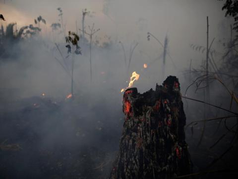 Un árbol ardiendo en el camino que lleva al Bosque Nacional Jacunda cerca de Porto Velho.