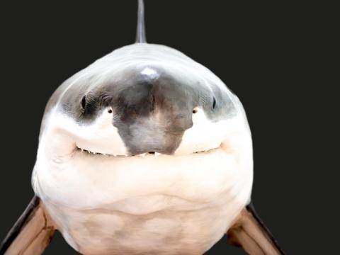 ¿Quién podría tener miedo de esta sonriente criatura?