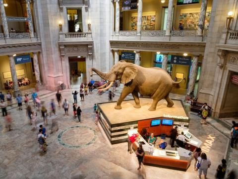 Hasta el año 1992, el Museo Nacional de Historia Natural era conocido como el Museo Británico (Historia Natural) o BM (NH).