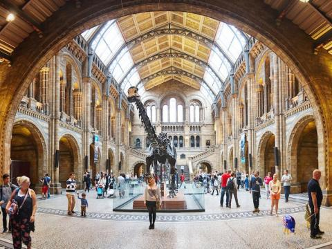Es el museo de historia natural más visitado del mundo.