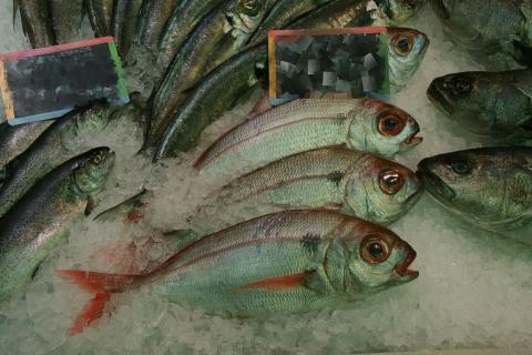 Besugo, pescado, pescadería
