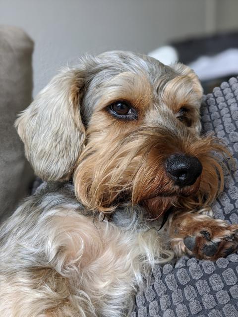 Foto retrato en mascotas con el Google Pixel 4 XL