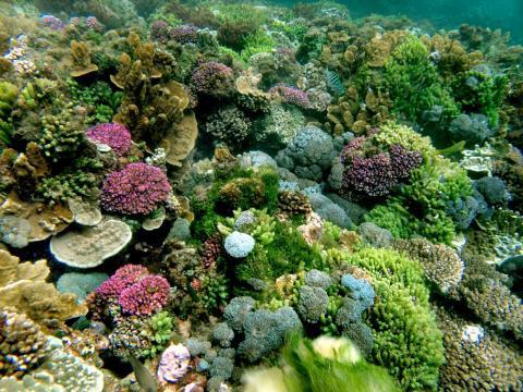 Los arrecifes de coral de la isla de Lord Howe todavía están llenos de color.