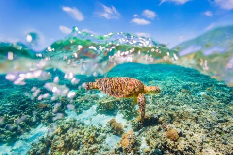 La Gran Barrera de Coral está frente a la costa de Australia.