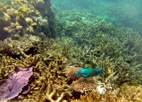 La Gran Barrera de Coral después del blanqueamiento de corales.