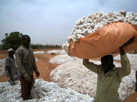 Granjeros trabajan el algodón en Burkina Faso.