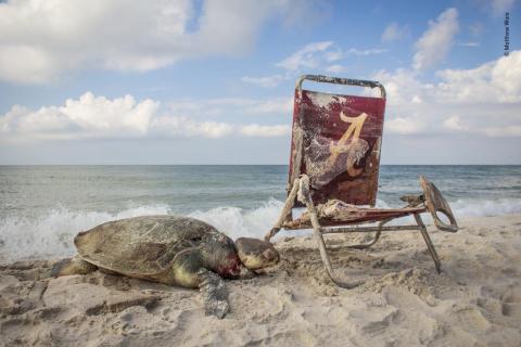 La tortuga marina de Kemp murió ahogada por una cuerda que estaba atada a una silla de playa a orillas del Refugio Nacional de Vida Silvestre Bon Secour de Alabama.