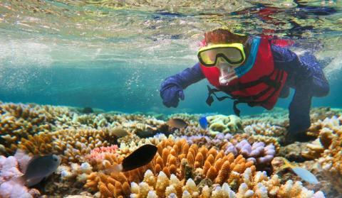 Una persona buceando en la Gran Barrera de Coral.