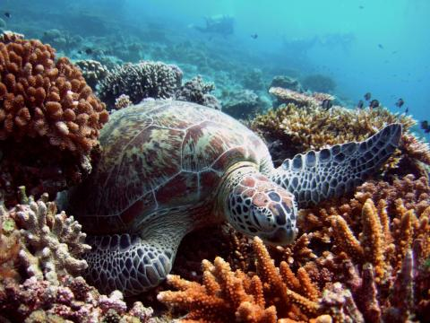 About 55% of the world's oceans could suffer due to rising temperatures, acidification, decreasing oxygen, and other symptoms of climate change by 2030.