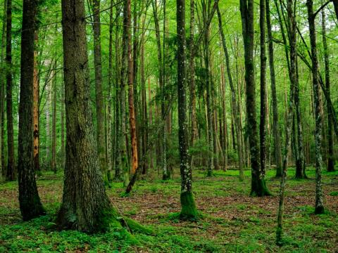 Bialowieza Forest, Belarus/Poland