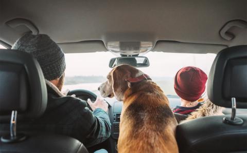 Cuidado con llevar mascotas sueltas en el coche: le para la polícia y le ponen 5 multas diferentes