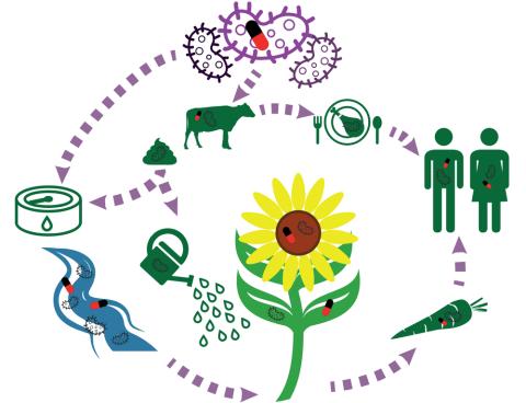Diseminación de los genes de resistencia y bacterias resistentes a los antibióticos en agricultura.