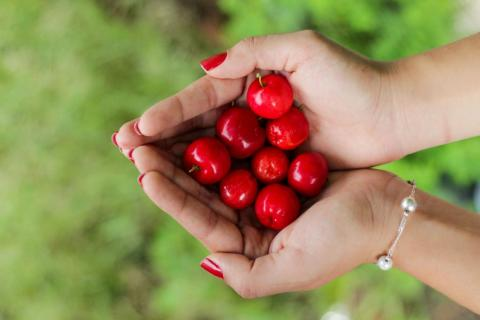 Cherry seeds and pits are poisonous? Who knew!