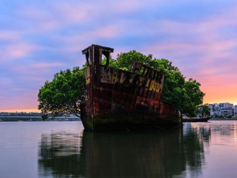 The SS Ayrfield has gone from military ship to a beautiful forest on the water.