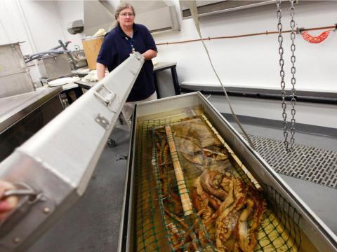 Cheryl Bright, gerente de recolección del departamento de zoología de invertebrados, cierra un contenedor que contiene un calamar gigante que fue recolectado en el Golfo de México.