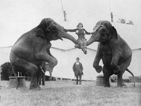 Una mujer es sujetada por elefantes en un circo en 1926.