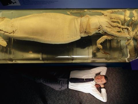 Retrato del biólogo marino Clyde Roper, con calamar en exhibición en DC.