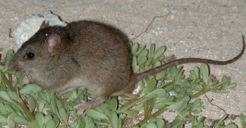 animales extintos está década