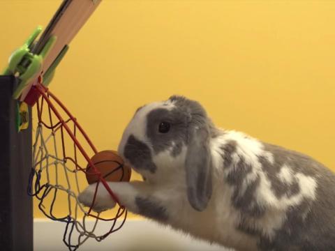 Bini el conejo.