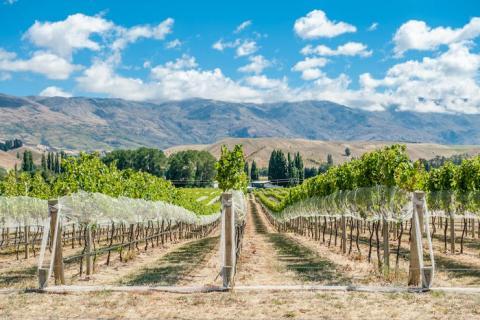 Para los entusiastas de los deportes de aventura amantes del vino, no busque más allá de Central Otago, Nueva Zelanda.