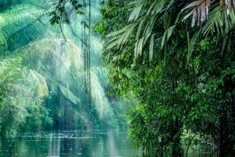 Costa Rica tiene un ambiente emocionante con mucha selva tropical para explorar.