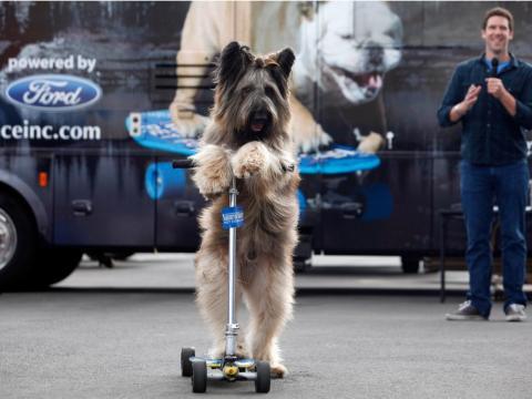 Norman el perro en 2012.