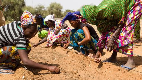 Mujeres trabajando en el Great Green Wall.