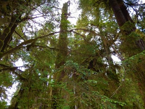 Forks, Washington, and the surrounding Olympic National Park are supernaturally pretty enough on their own.