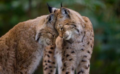 Un par de gatos cariñosos.