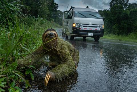 "People and Nature category winner: ""Why did the sloth cross the road?"" by Andrew Whitworth"