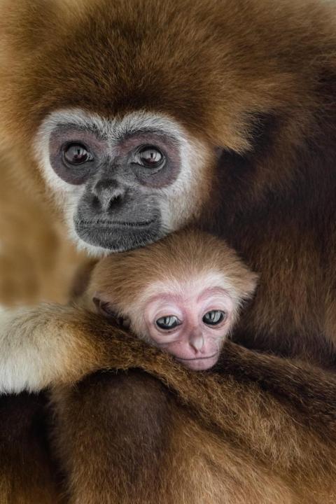 Un mono abraza a su cría.
