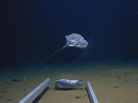 The deepest reaches of the ocean harbor all kinds of strange, unknown creatures. The last decade of deep-sea exploration has revealed several of them.
