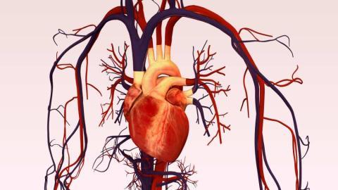 Foto de un corazón.
