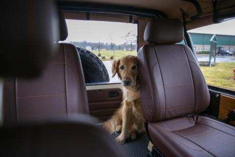 Levin took his pet dog and me for a test drive in the Wolf, and I was pleasantly surprised by the vehicle.