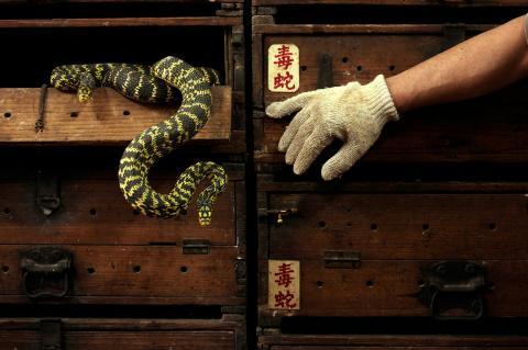 Serpientes Wuhan