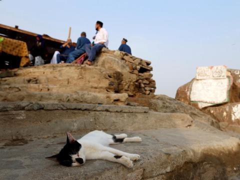 Un gato duerme en el monte Al-Noor.