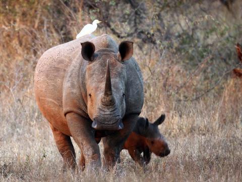 Eric y Donald Trump Jr. son aficionados a la caza, una afición que puede resultar muy cara. Por ejemplo, cazar un rinoceronte blanco cuesta más de 66.000 dólares.