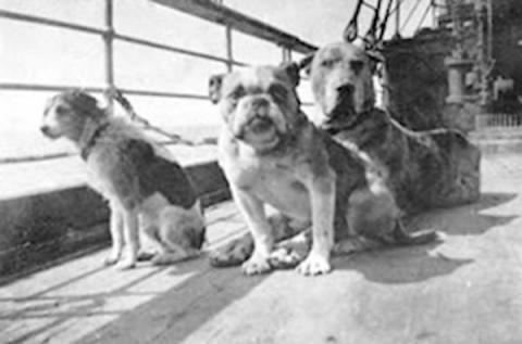Perros del Titanic, incluyendo al perro de Isham en el extremo derecho.
