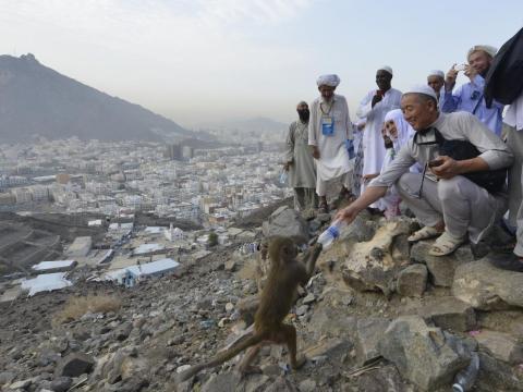 Un peregrino musulmán le da agua a un mono.