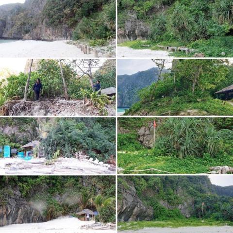 Así se está recuperando la playa y el bosque de Maya Bay.