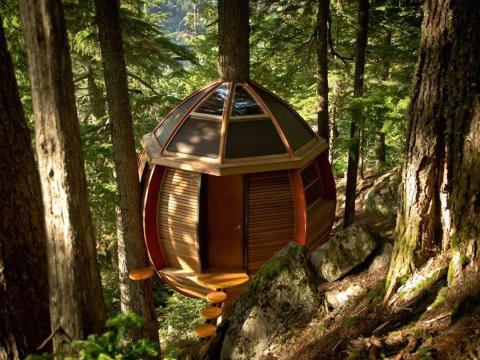 Allen's treehouse.