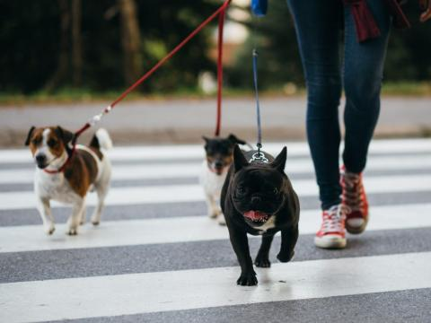 Add extra exercise to your pet's day to help them ease into a new routine.