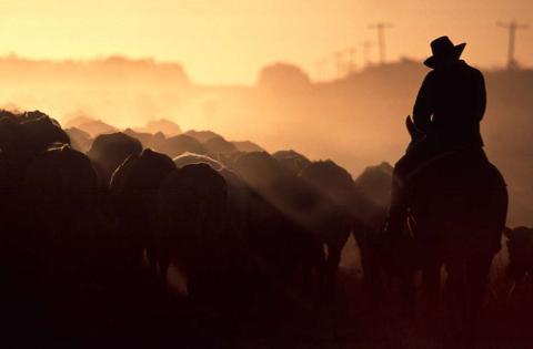 Un agricultor pastorea su ganado cerca de la ciudad de Queensland de Aramac.