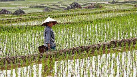 Una agricultora en Vietnam.
