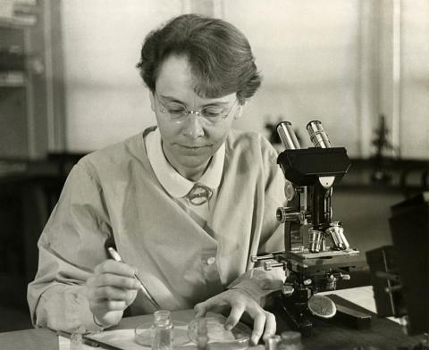 Barbara McClintock trabajando en su laboratorio en el Departamento de Genética de la Carnegie Institution en Cold Spring Harbor, Nueva York en 1947.