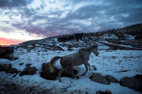 Un caballo camina en la nieve en la base de Mount Hermon, en los Altos del Golán, cerca de la frontera entre Israel y Siria.